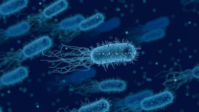بیماری عفونی باکتریایی در اروپا